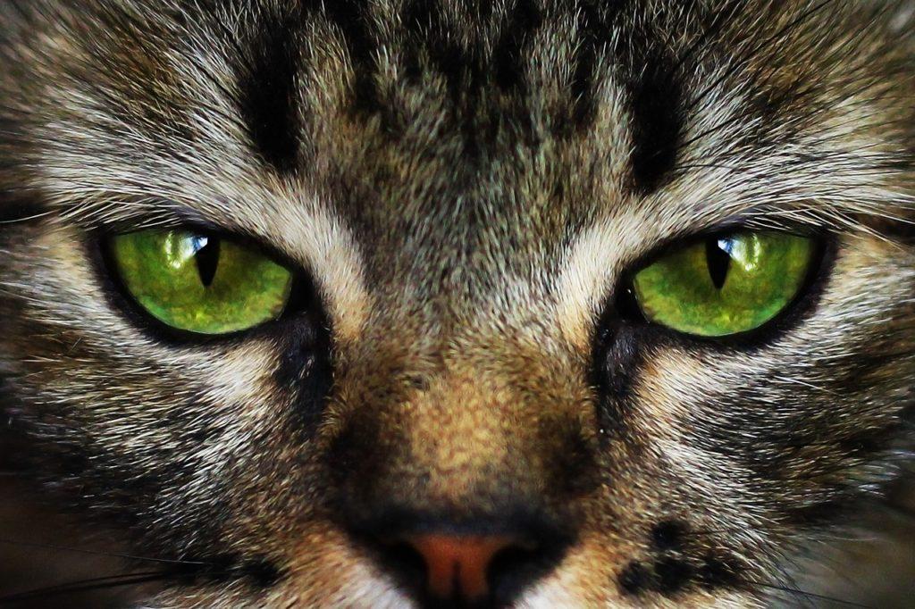 ACTU DU MOIS : Notre chat ce magicien !