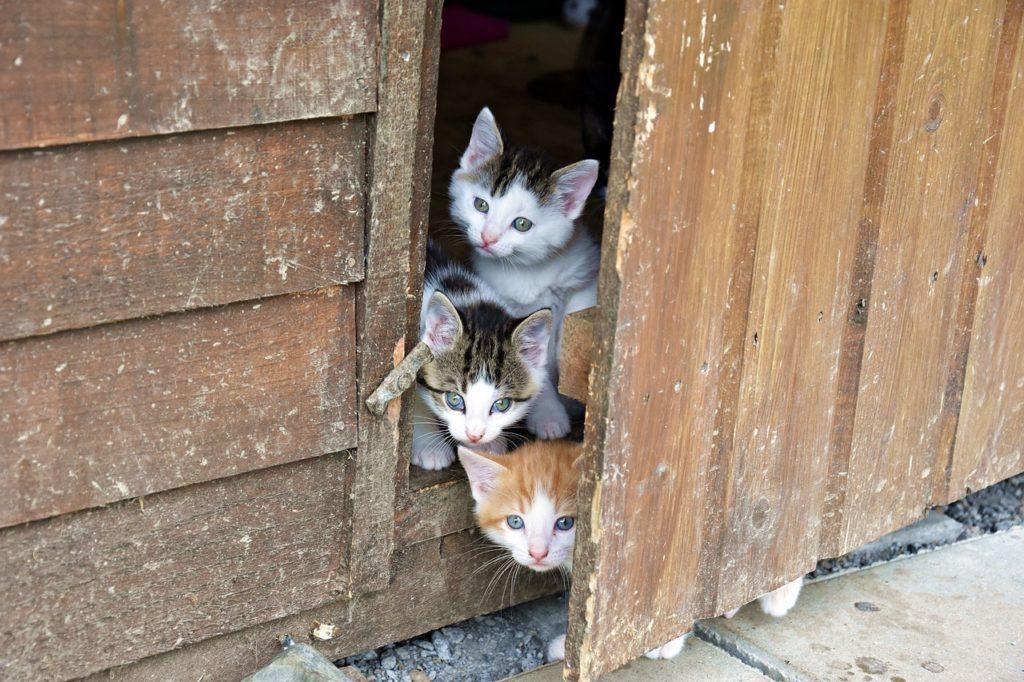 Demandes d'adoptions de chatons